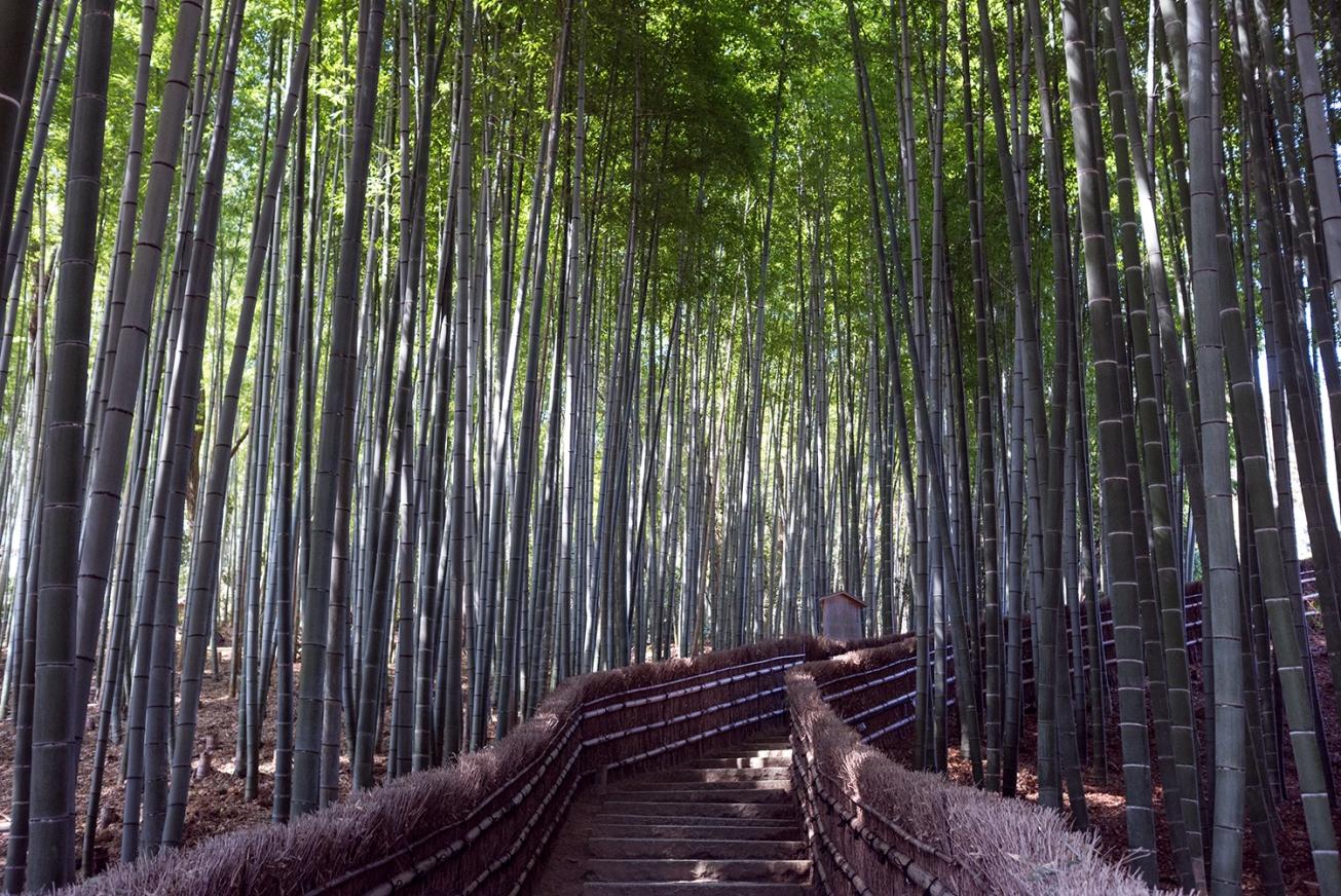adashino nebutso-ji temple-13