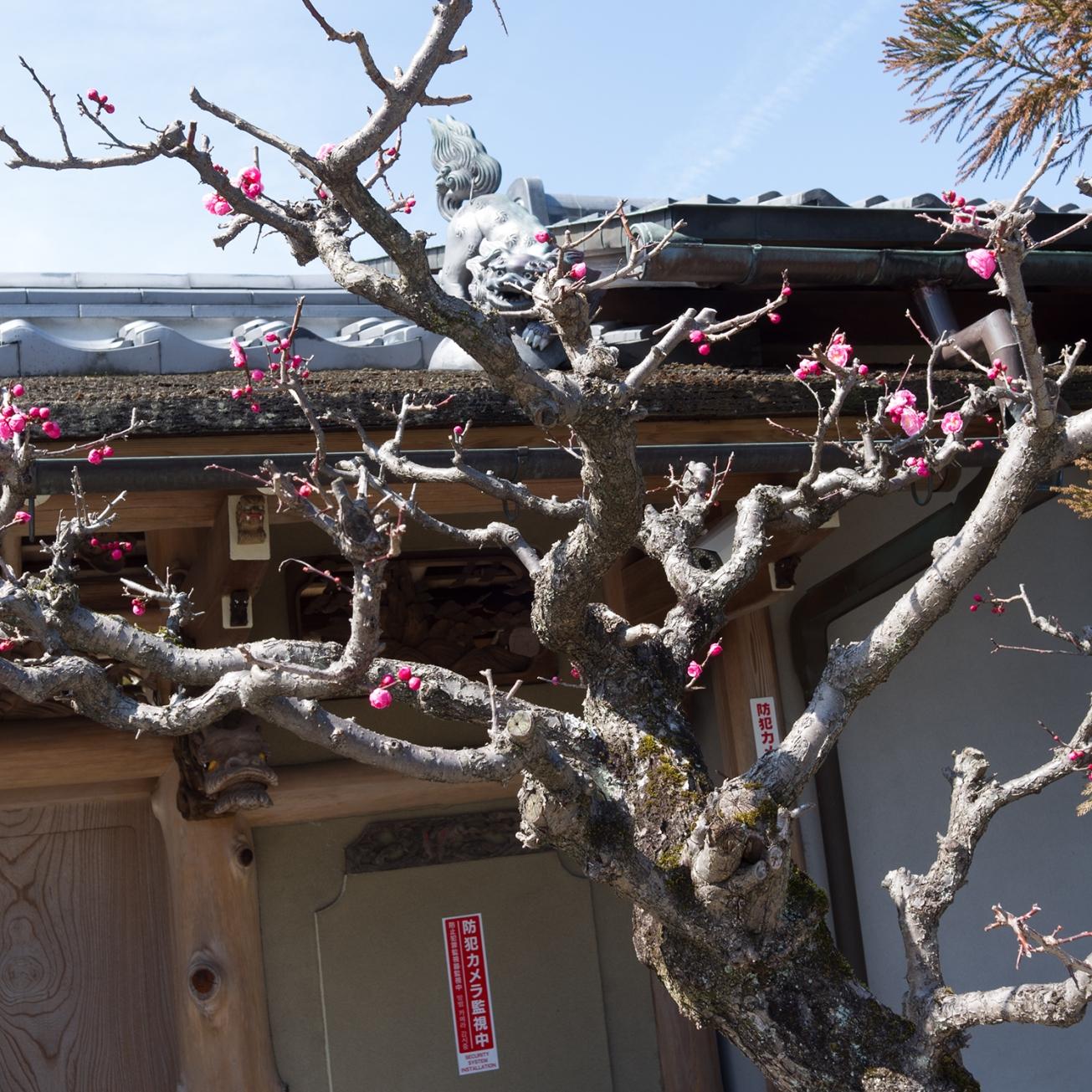 adashino nebutso-ji temple-26
