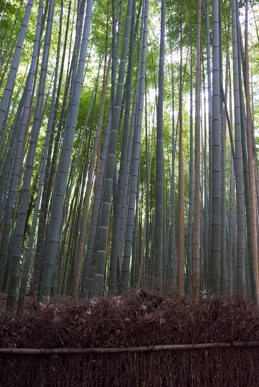 Arashiyama _bamboo forest-70