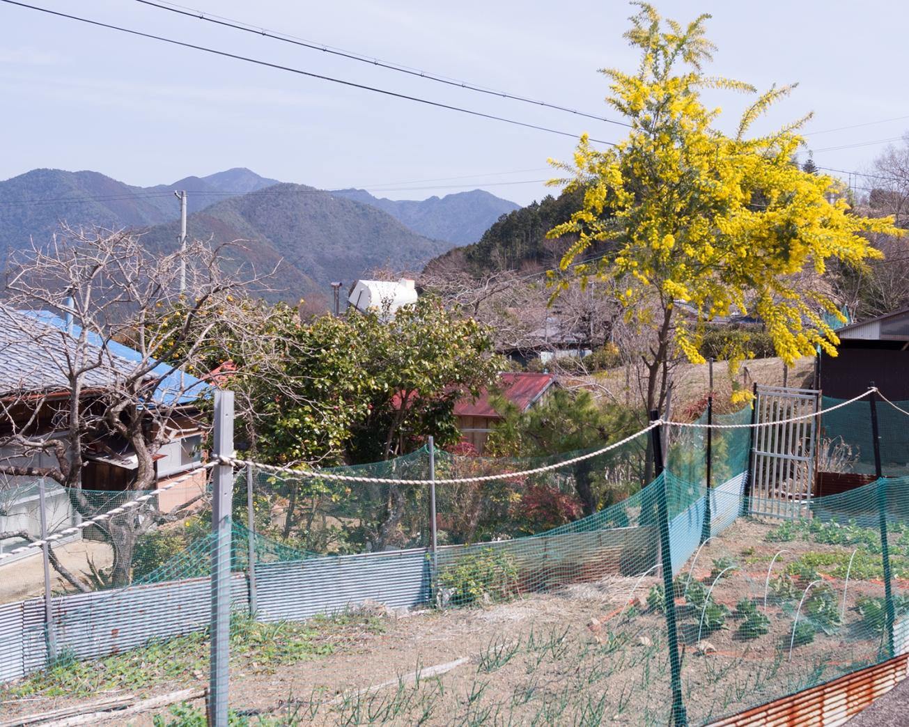 kunmano hongu-33