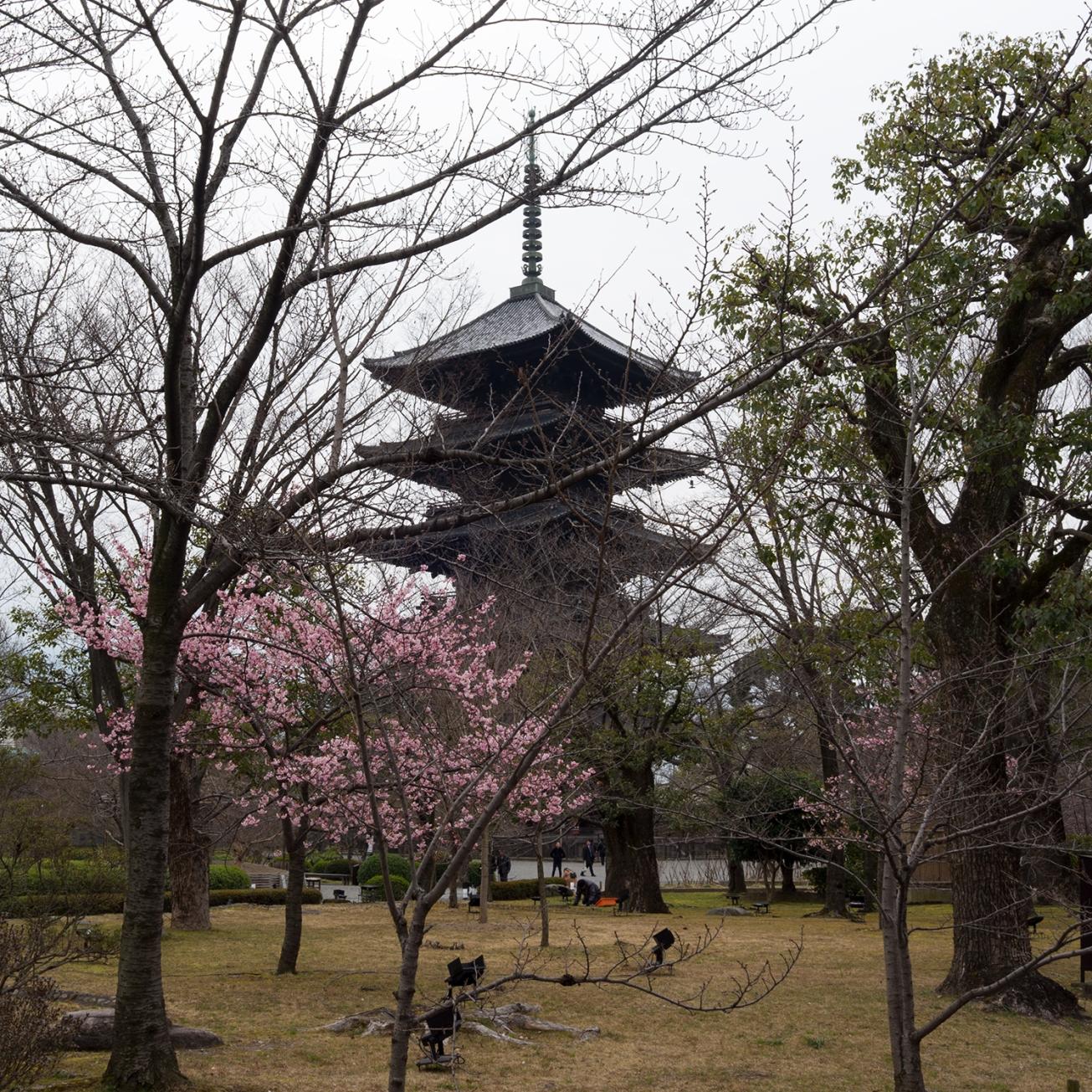 toji pagoda-3