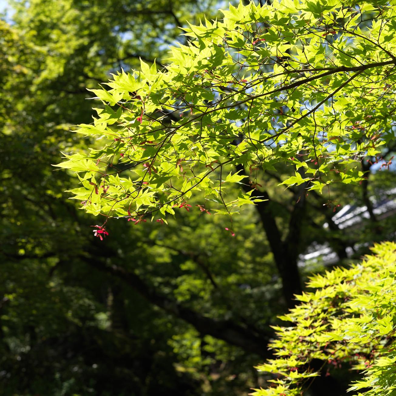 kyoto_0075